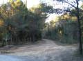 Piste forestière de retour vers le Lac de Barbaira