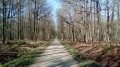 La Forêt d'Angervilliers