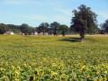 Plaine agricole de Sagnemoussouse