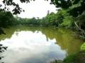 Le parc et ruiseau de Morchêne à Saint-Cyr-en-Val