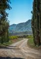 Entre les vignes et les oliviers du Domaine d'Éole à Eygalières