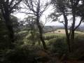 Point de vue entre les arbres