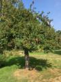Du lavoir aux Sources de l'Ancre par le Bois de la Garenne à Bercenay