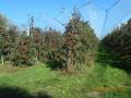 Chemin des Pommes à Secondigny