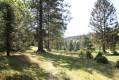 Prairie et forêt