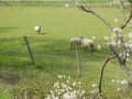 Prairie près du Guimand