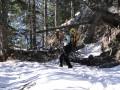 Premières chûtes de neige