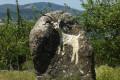 Près d'une chèvrerie après le hameau de Pailler