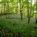 Rocquefort entre les sources de la Durdent et le Vert Buisson