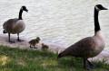 Promenade en famille sur le Port