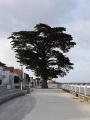 La pointe Sud de l'île d'Oléron au départ de Saint-Trojan