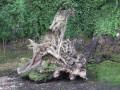 Quand la nature devient sculpteur