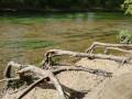 Racines aux bords du Loiret - Pointe de Courpain
