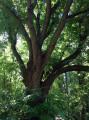 Forêt de Bréviande et Menhir du Grand Berger