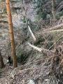 Les arbres du haut Conflent
