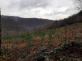 Randonnée des 2 moulins et de la scierie sur l'Hermeton au départ de Gochenée