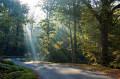 À la découverte de la Forêt Domaniale de Mervent
