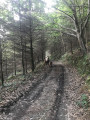 Rencontre sur le chemin forestier