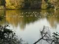 Réunion de canards
