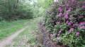 Rhododendrons près du château de Villette