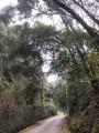 Route d'accès au vallon de Terron.