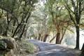 Route D71 bordée de chênes liège