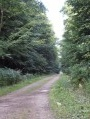 Route Forestière Centrale