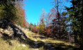 Route forestière de Davière