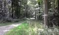Route forestière de la Loge, forêt d'Eawy.