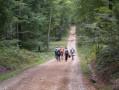 Route Forestière des Deux Mamelons