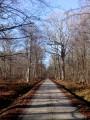 La Forêt de Rambouillet à vélo