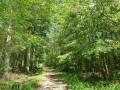 Route Forestière du Parc d'en haut