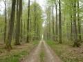 Route forestière en Eawy