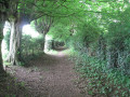Le sentier des cours d'Ay et des choats à Vieux-Mesnil