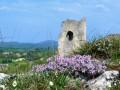Ruines du remparts et du donjon du Château de Montpensier