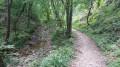 Saute-ruisseaux près de Loire-sur-Rhône