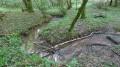 Ruisseau de l'allée verte