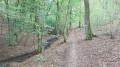 Balade dans le Bois du Grand Fréchy à Biesme
