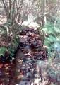 Ruisseau de la Pilette