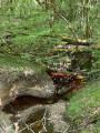 Boucle dans la forêt du Mas d'Agenais
