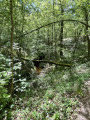 Petite boucle dans la Forêt du Mas-d'Agenais