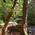 ruisseau des Corbières