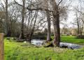 Ruisseau le Viville