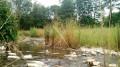 Zone humide de la Sauzaye
