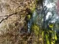 Gorges de l'Abime - Crêt Pourri - Vaucluse
