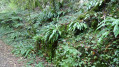 Royans Vercors - Gorges du Chaillard