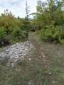 Sentier à travers une forêt naturelle
