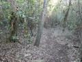 Sentier dans la colline Tante Victoire