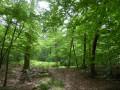 Dans la forêt de Haguenau du Hundshof au Forlenweg