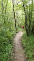 Sentier dans le bois des Magnolias